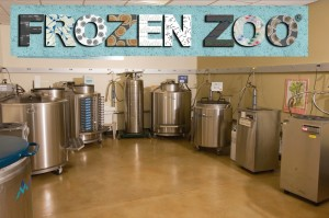 are zoos harmful The dodo archive if we really care about animals, zoos are the bad habit that we need to drop.