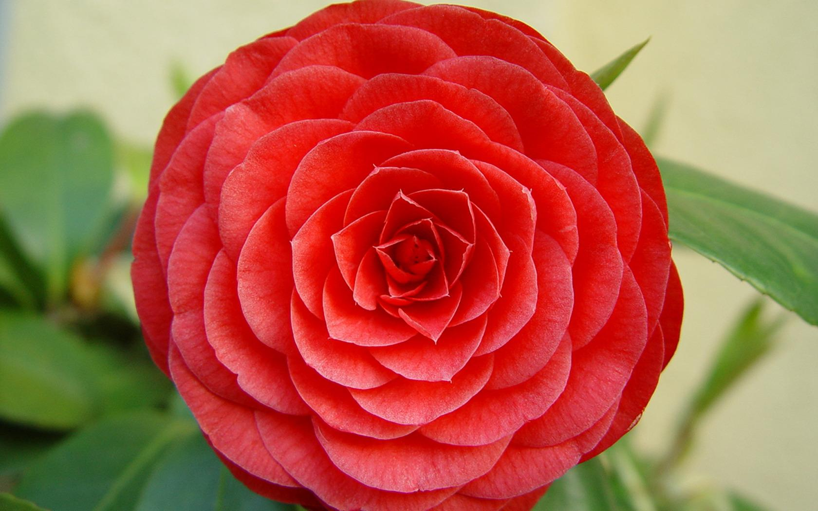 Perfect Flower - Flower
