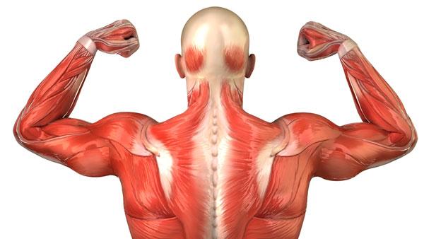 Duchenne Muscular