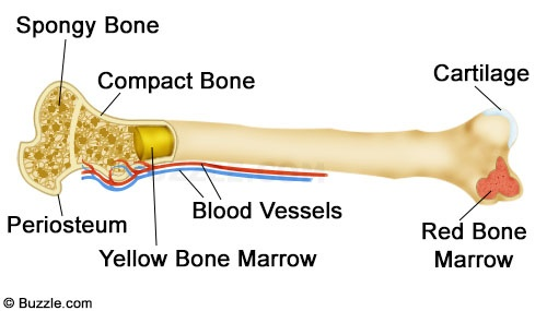 Skeletal System On Emaze