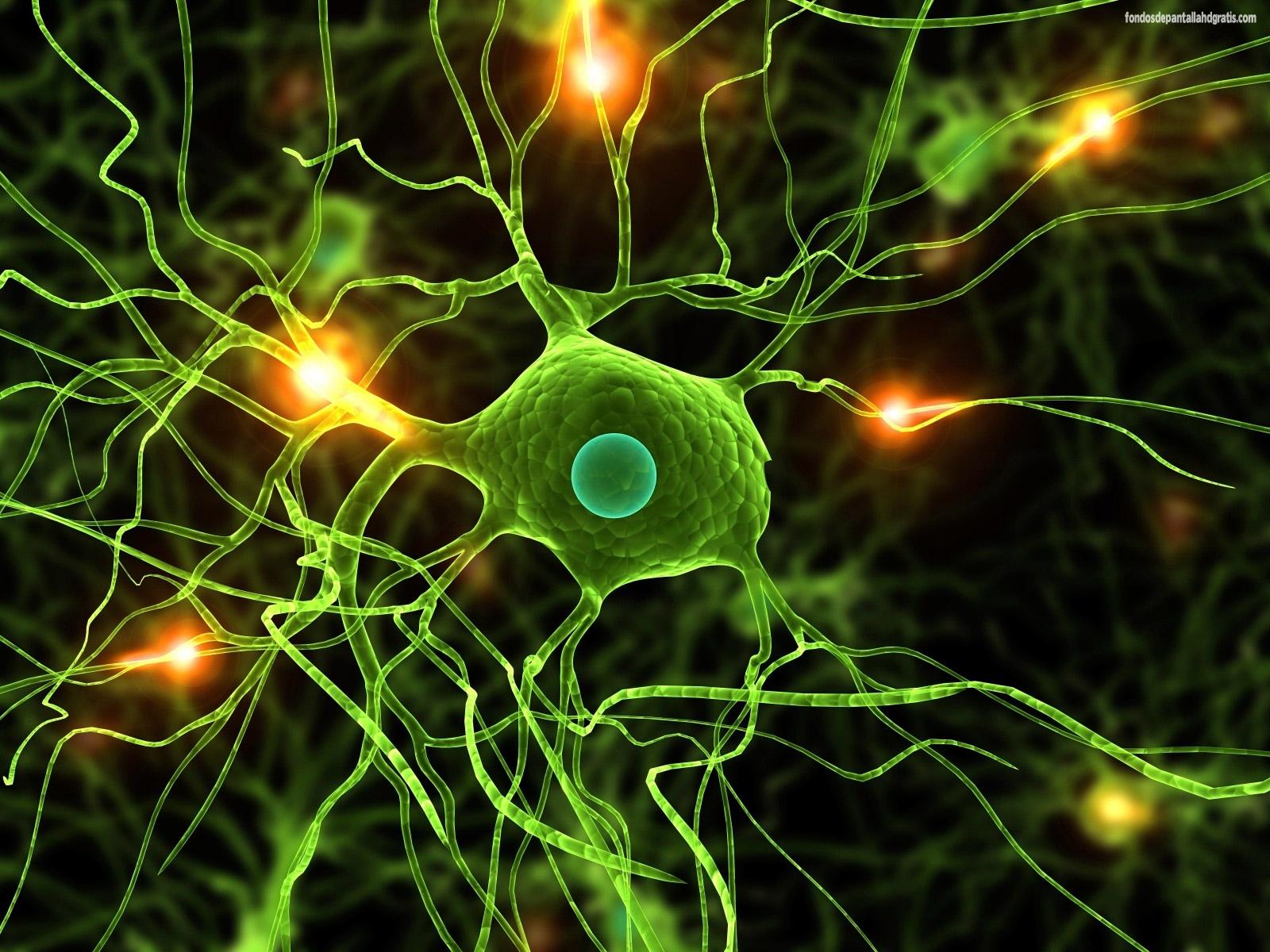 Resultado de imagen de Cien mil millones de neuronas
