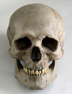 skeletal system on emaze, Skeleton