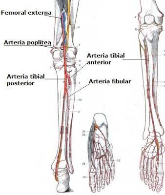 angiografia on emaze