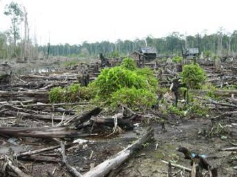 deforestation in costa rica essay Another reason and the largest reason for the deforestation of costa rica's rain forest is for agriculture and for pasture land save time and order ecotourism in costa rica essay editing for only $139 per page top grades and quality guaranteed.
