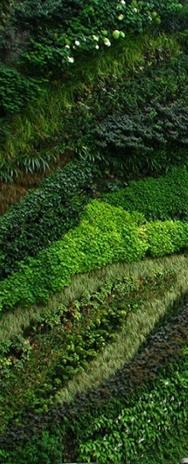 Landscape on emaze for Muros verdes beneficios