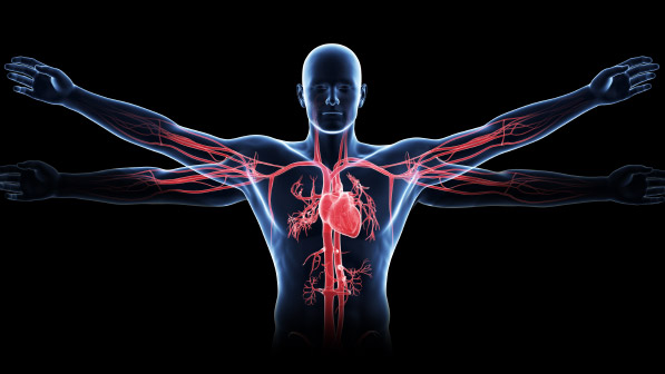 Health powerpoint HUMAN ANATOMYANDPHYSIOLOGY on emaze