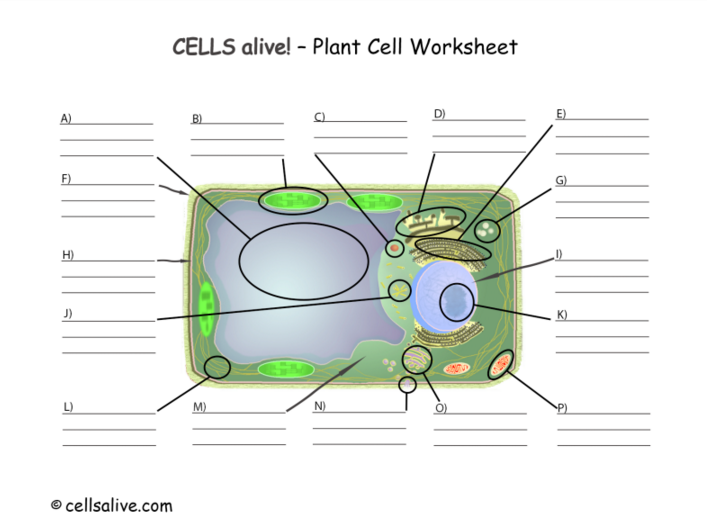 Cells Alive on emaze – Cells Alive Worksheet Answers