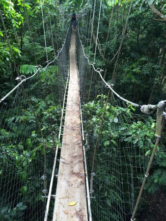 Activities Sua open trench Robert Louis Stevenson Museum Alufaaga blowholes Afu Aau waterfall Papaseea sliding rock Falealupo canopy walk ... : canopy walkway samoa - memphite.com