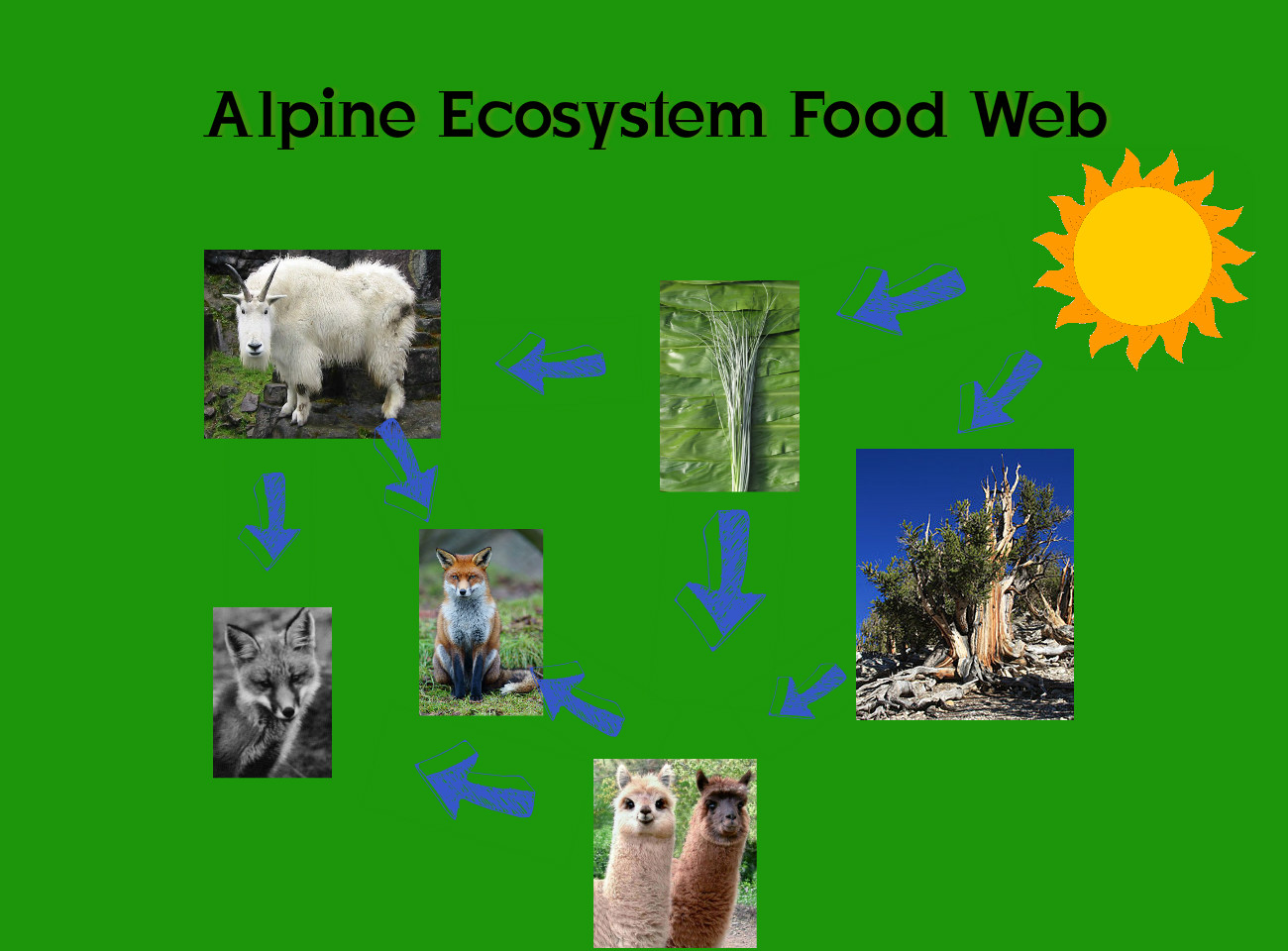 alpine ecosystem These alpine biomes have some of the most diverse climates in the world on one mountain, several temperature and moisture regimes can be present on one mountain, depending on what the elevation is, and which direct the slopes face.