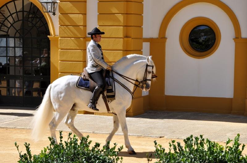 Fundacion Real Escuela Andaluza Del Arte Ecuestre By Koniarz17 On Emaze