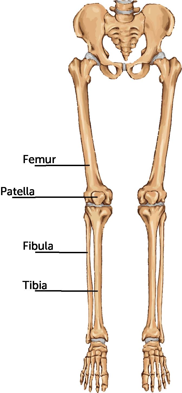 how to fix a broken femur