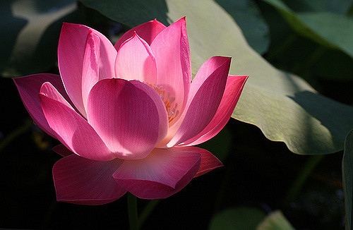 Odysseus journey on emaze if you eat the lotus flower then it makes you just not want to go back home mightylinksfo