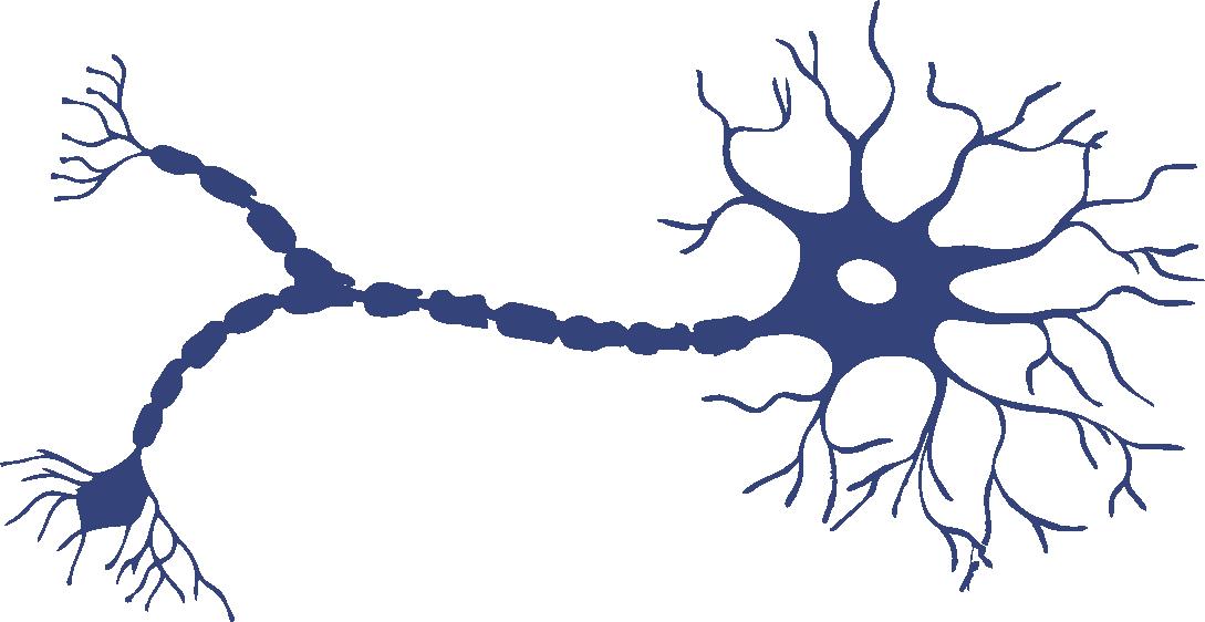 """Cerebro y Neurociencia: """"De la Neurona al Cerebro"""""""