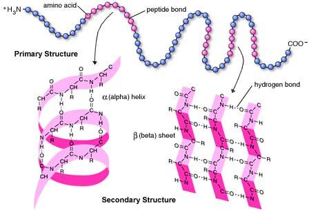 Proteinas By Lendo Badi3 On Emaze
