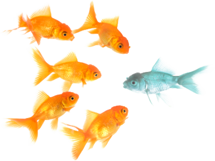 Aquamarine tropical on emaze for Reproduccion de peces ornamentales
