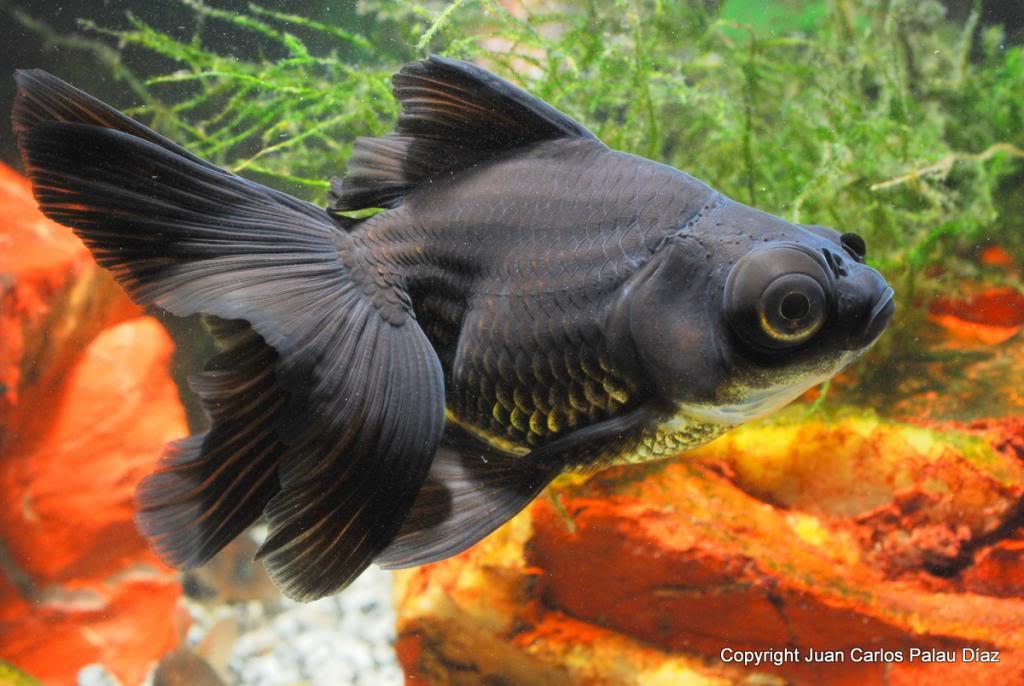 Aquamarine tropical on emaze for Estanques de peces ornamentales