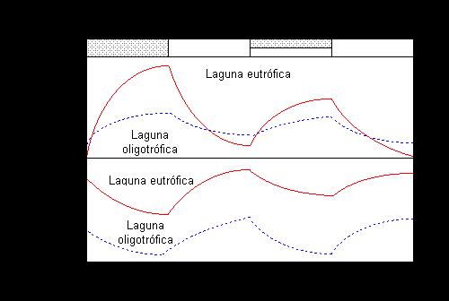Lagunas oligotr ficas on emaze for Construir laguna artificial