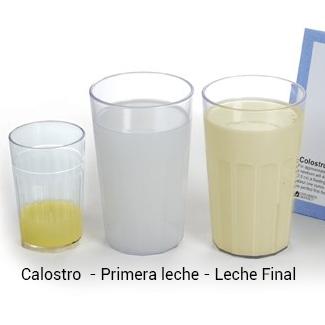 Tipos de leche materna oms