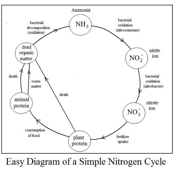 Station 1 – Nutrient Cycle Worksheet