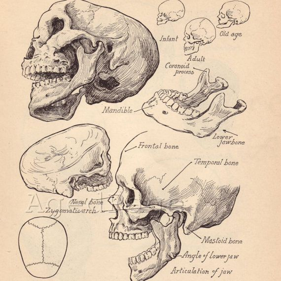 Antique Anatomy Books - Image Antique and Candle Victimassist.Org