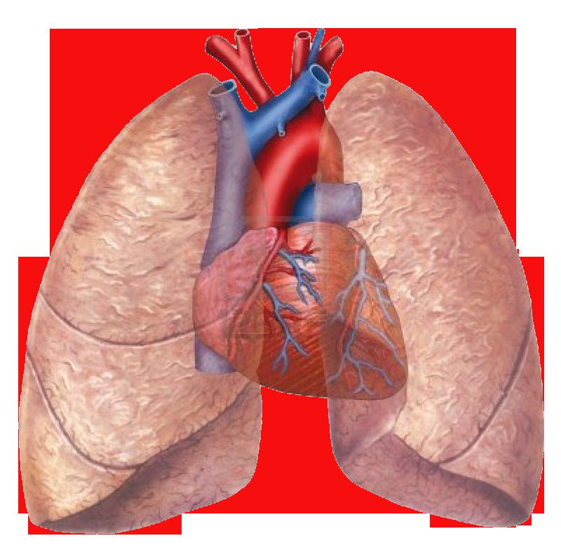 informatica anatomia pulmonar - Mapa Mental
