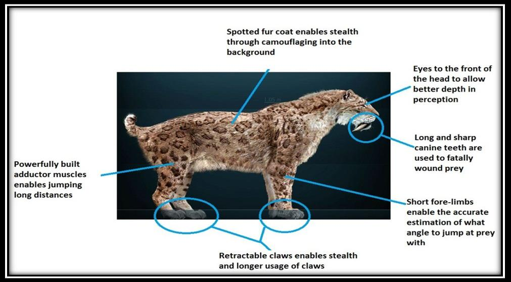 d466ba78 1d61 487e 8c4c c87f85d94189 jaguarby kelsi on emaze jaguar diagram at panicattacktreatment.co