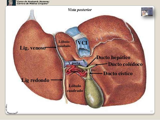 Cirrosis hepática on emaze