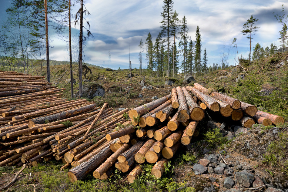 Natural Resource Depletion - Lessons - Tes Teach