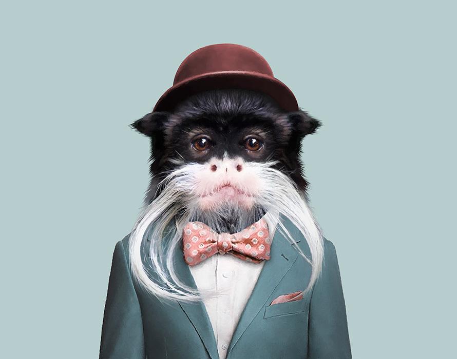 Bearded Monkey Name: Presentation Name On Emaze