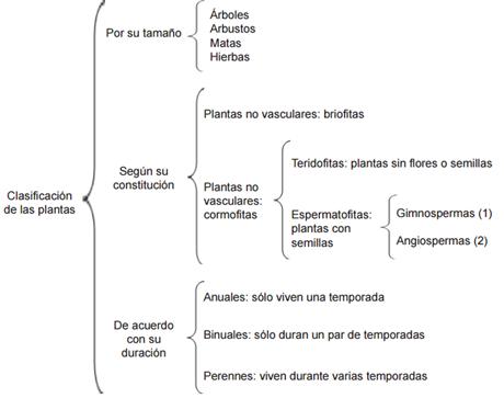 S1 bqvi biologia ii caracteristicas de for Las caracteristicas de los arboles