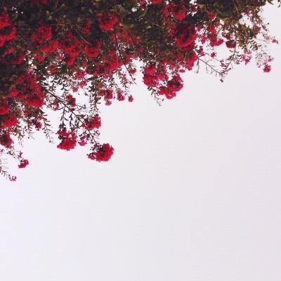 Fresh Rosa Pastello Tinta Unita Sfondi Tumblr Sfondo