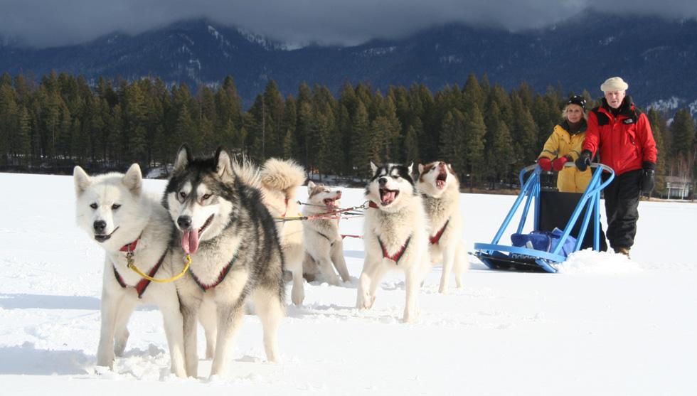 dog sledding - 980×557