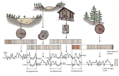 effetti del serbatoio datazione del radiocarbonio e calibrazione