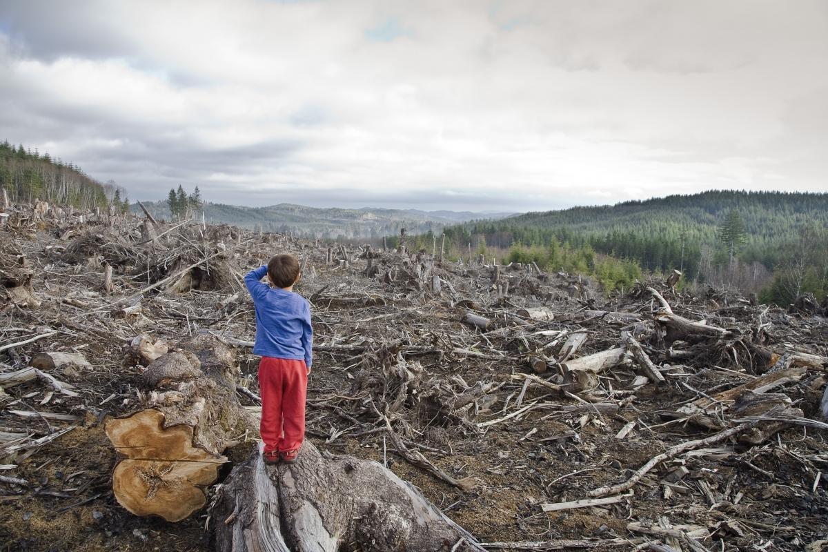 Картинки по запросу вырубка лесов в россии