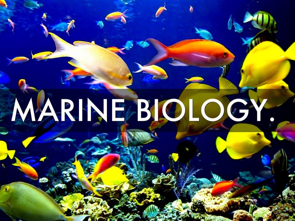 Image Gallery Marine Zoologist