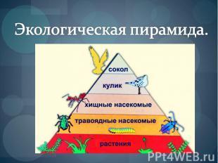 Экологические пирамиды работа с пирамидой моделью веб модели бонгакамс