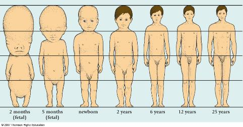 Changes Infant facial growth