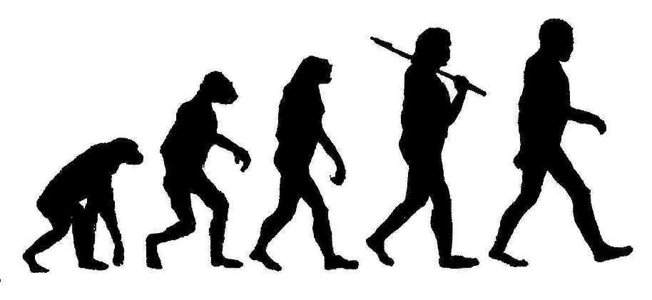 The Five Stages of Evolution on emaze