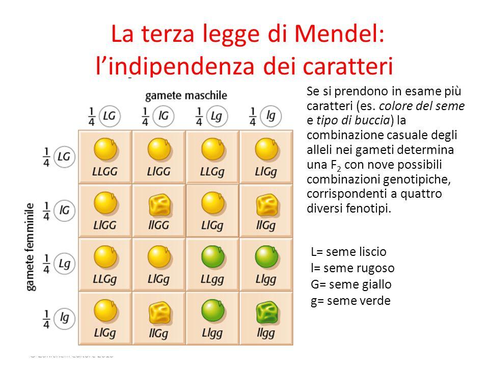 Mendel E Le Leggi Della Genetica - Lessons - Tes Teach