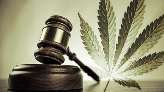 uso recreativo marihuana by ecpdani95 on emaze