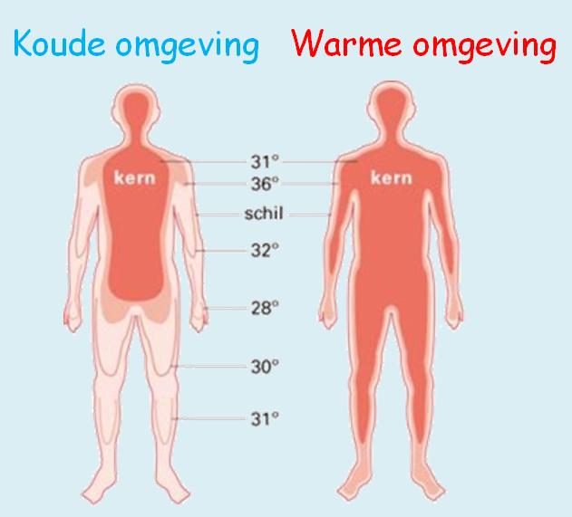 neurogene shock symptomen