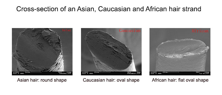 Growth rate of asian hair