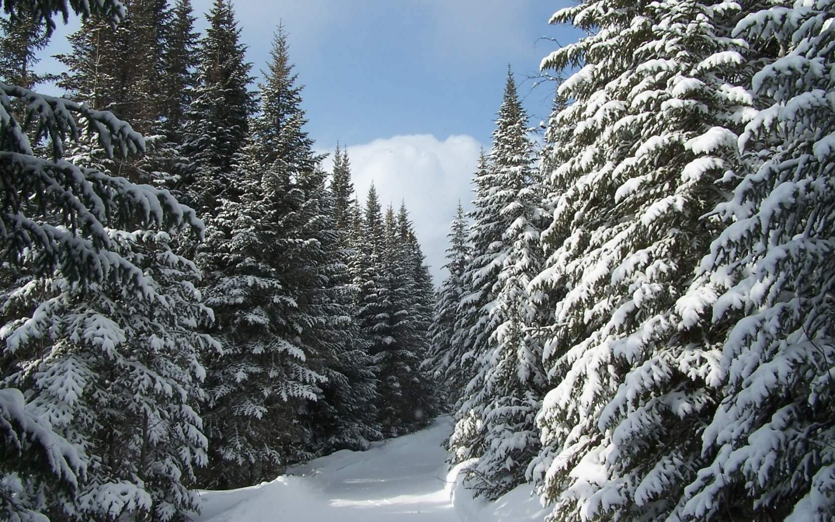 Coniferous Forest on emaze