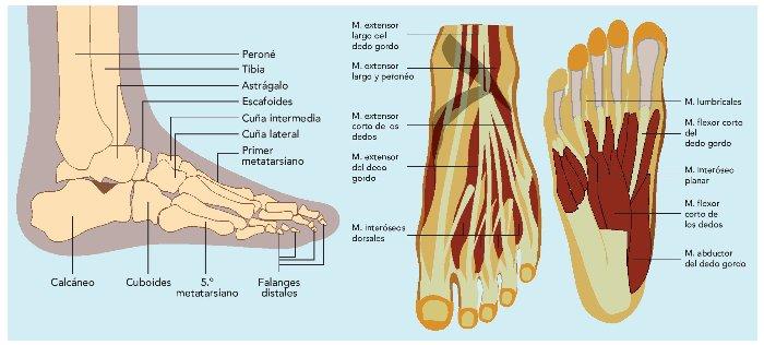 PATOLOGÍAS del pie