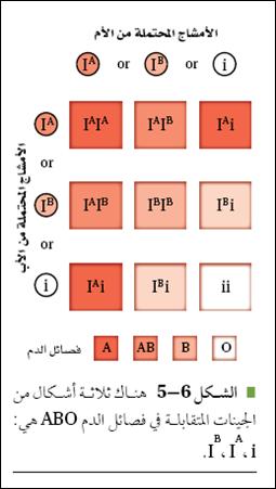 الأنماط الوراثية المعقدة