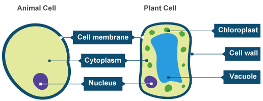Cellular organelle on emaze ccuart Choice Image