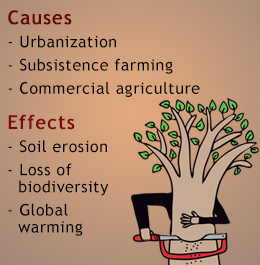 causes and consequences of deforestation pdf