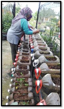 Profil Kebun Dapur Parliimen Kuala Krau Rosmida Dan Azizah On Emaze
