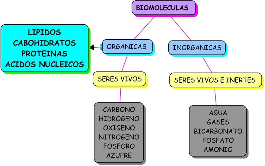 Resultado de imagen de moleculas organicas e inorganicas de los seres vivos