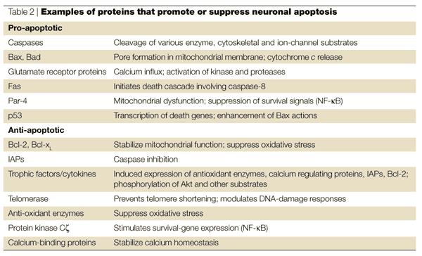 the macromolecules on emaze